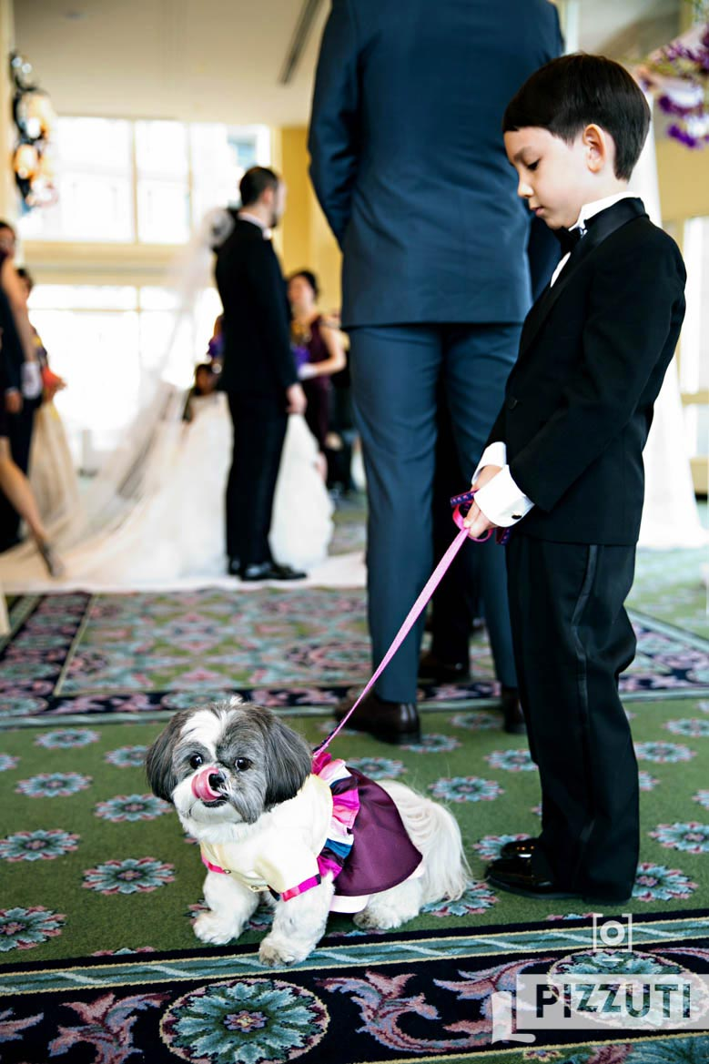 Wedding Dog And Junior Groomsman